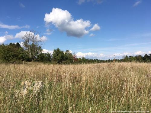 Windknollen Jena Graslandschaft